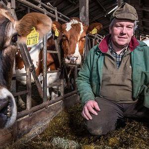 Bauer Hauke Jaacks mit seinen Kühen.