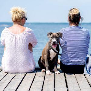 Mit dem Hund am Strand