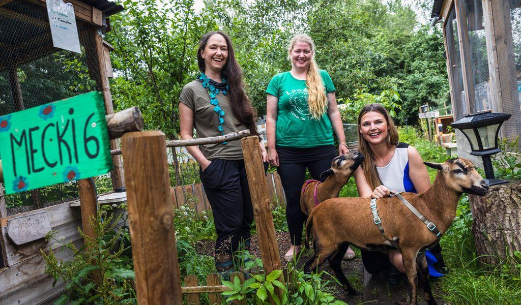 Hamburg: Fraktionsvorsitzende der Grünen Jennifer Jasberg (l.), die Leiterin des Looki e.V. Vanessa Haloui (m.) und die Grünen Tierschutzsprecherin Lisa Maria Otte zusammen mit den Kamerunschafen Hanni und Nanni.