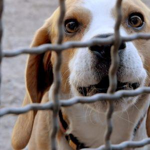 Hamburg: Beagle wurden im LPT-Labor für Tierversuche missbraucht.