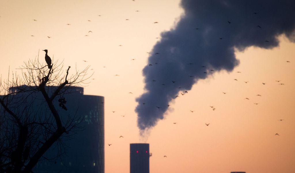 Ein Kormoran sitzt auf einem Baum, während im Hintergrund Schornsteine des Kraftwerks am Westhafen zu sehen sind.