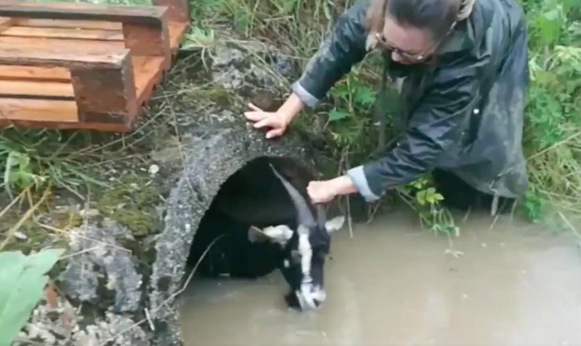 Polizist rettet Ziege