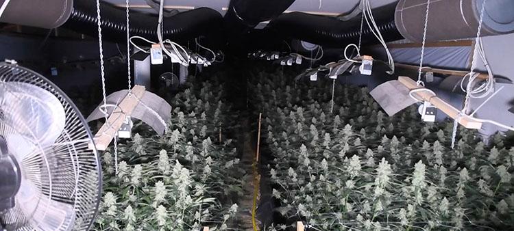 Eine Drogenplantage