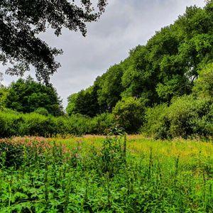 Naturschutzgebiet Moorgürtel