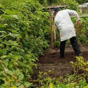 Kleingärtner in seinem Garten