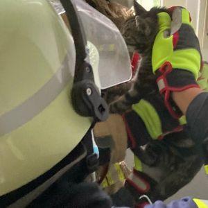 Feuerwehr rettet Katze