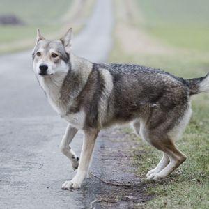 In einem Park in Hannover sollen Wölfe gesichtet worden sein. (Symbolbild)