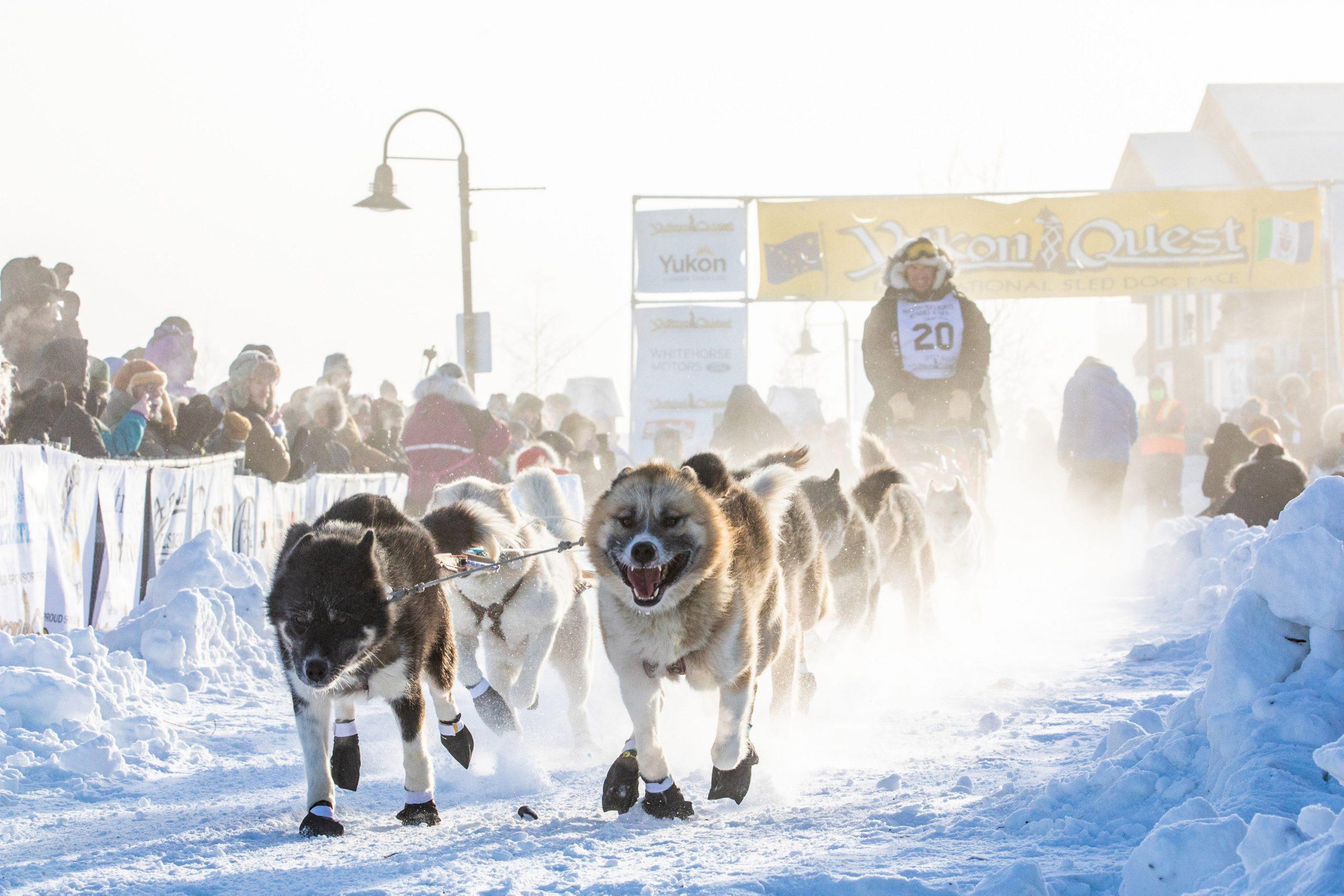 Der Hunde-Flüsterer, Hendrik Stachnau Hier: beim Yukon Quest-Rennen